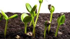 Подобряване на почвата